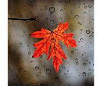 leaf-3865014__340 (2)